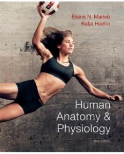 human anatomy and physiology elaine marieb pdf